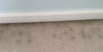 preventing carpet mold in a home